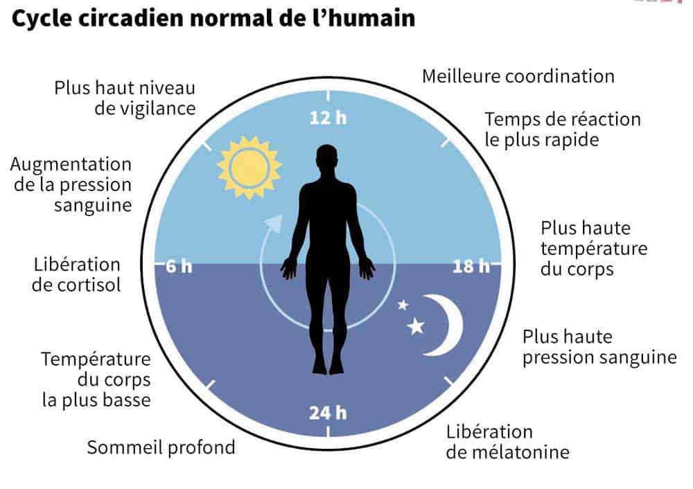 horloge circadienne et l'organisme humain